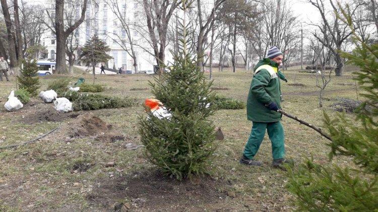 Pentru un sector mai verde, mai curat!  În sectorul Rîșcani...